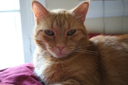 Max on Bed Close-up 1 (Jun 25, 2006)